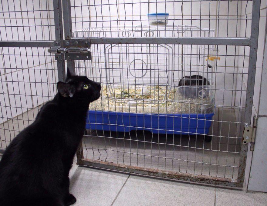 lyutsik helping a rodent