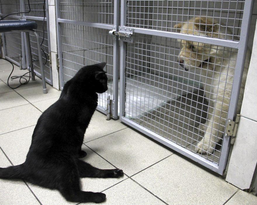 lyutsik checking on a dog