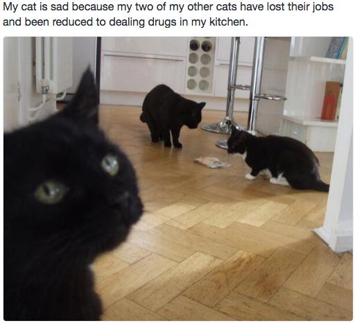 sad cat 9