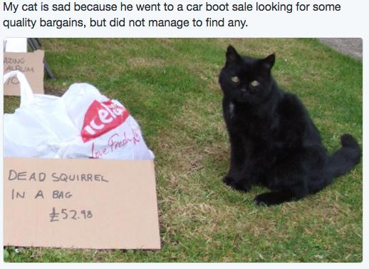 sad cat 10