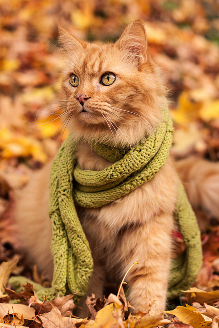 cat wearing scarf in the leaves