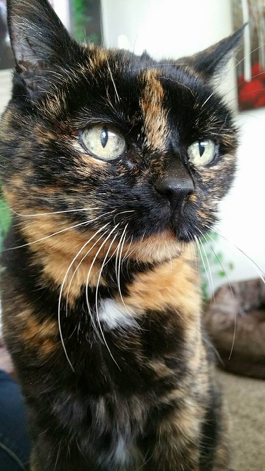 tortie posing for the camera