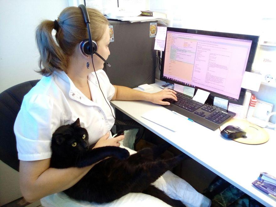 lyutsik cuddling in lap of staff