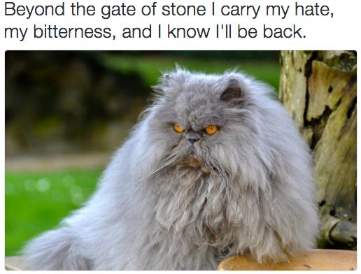 rock cat 2