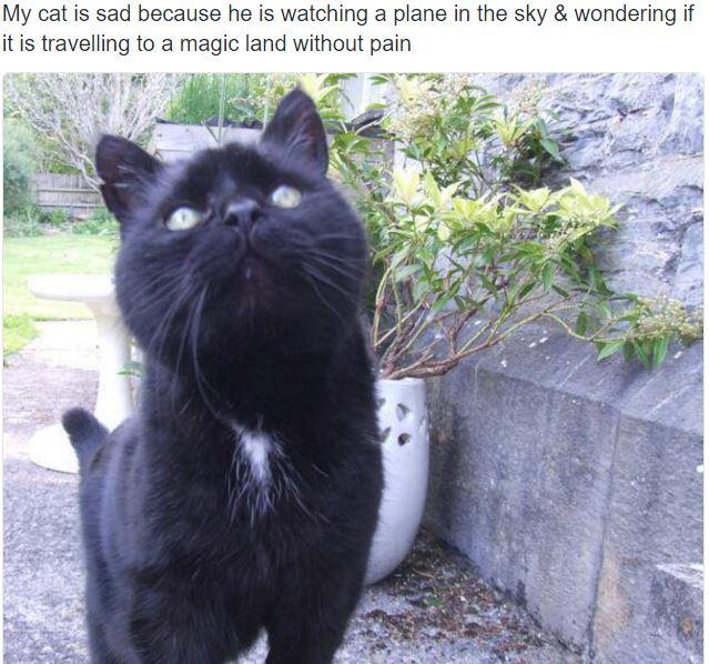 sad cat 13