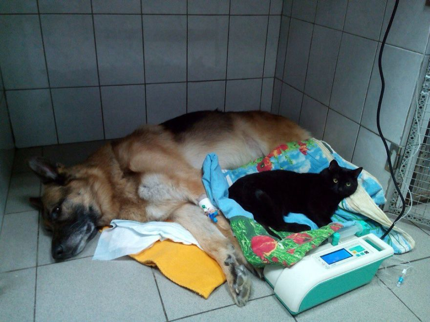 lyutsik resting next to a dog