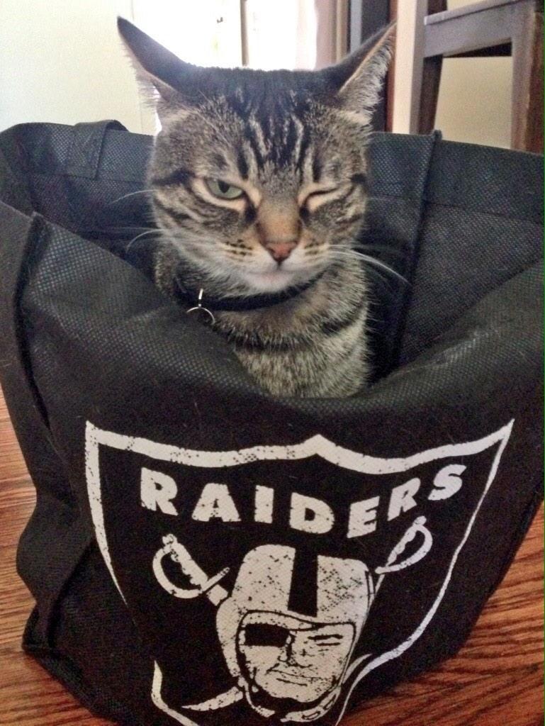 raiders cat