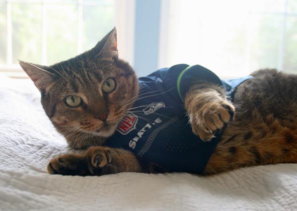 seattle cat