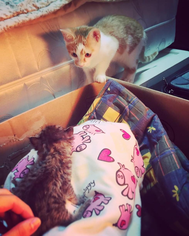 rescue cat meeting teeny kitten