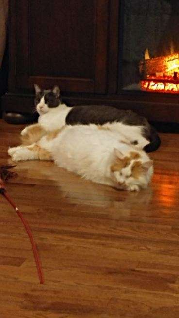 martin and mr. pinkerton cuddling by the fire