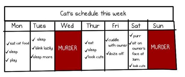 murder schedule