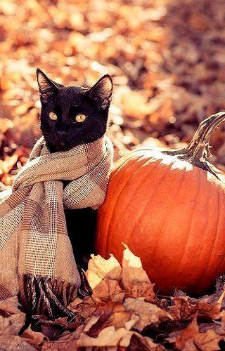 black cat in scarf next to pumpkin