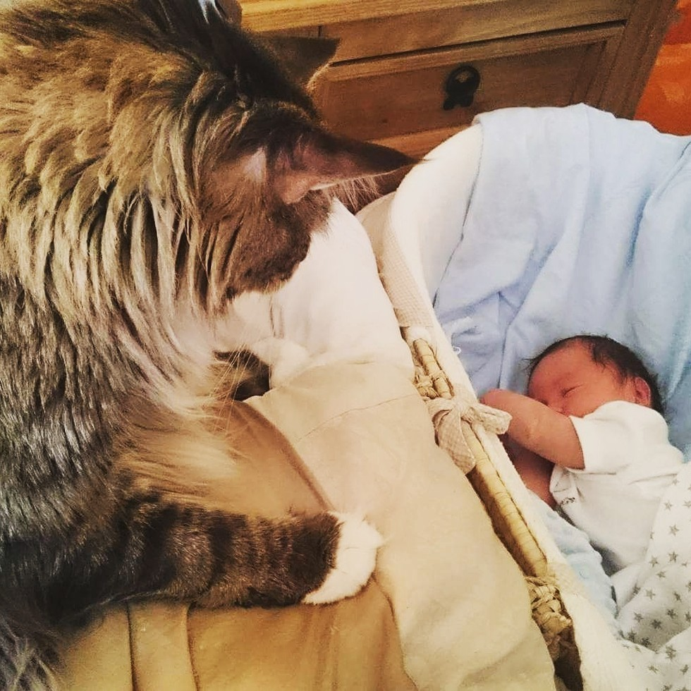 ludo the cat watching over his baby brother