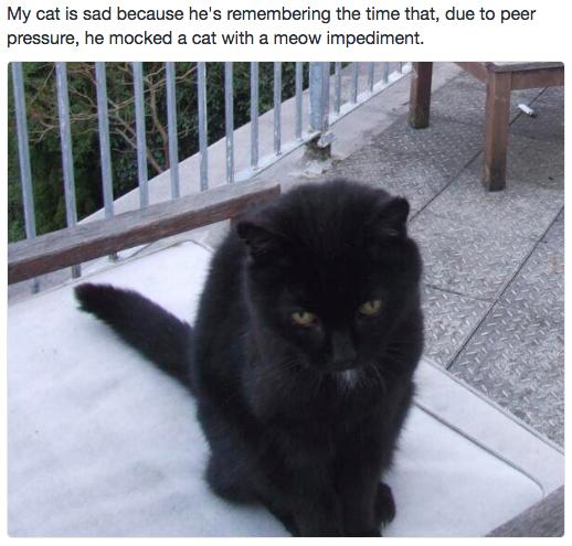 sad cat 7