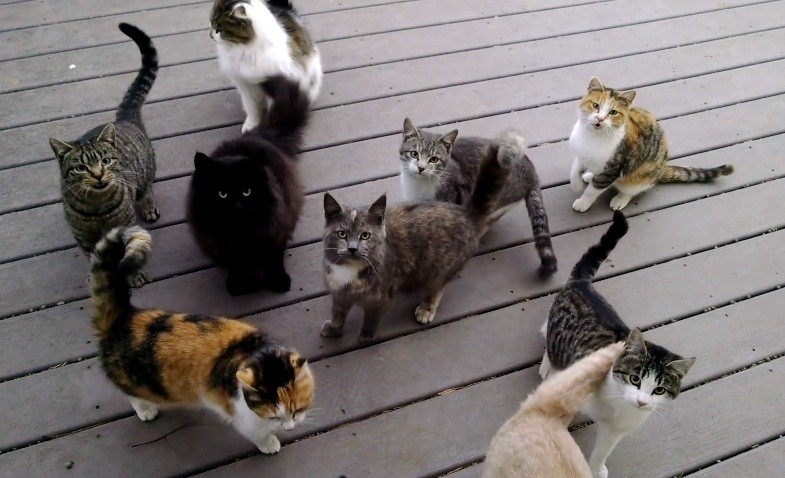gang of cats on the back porch