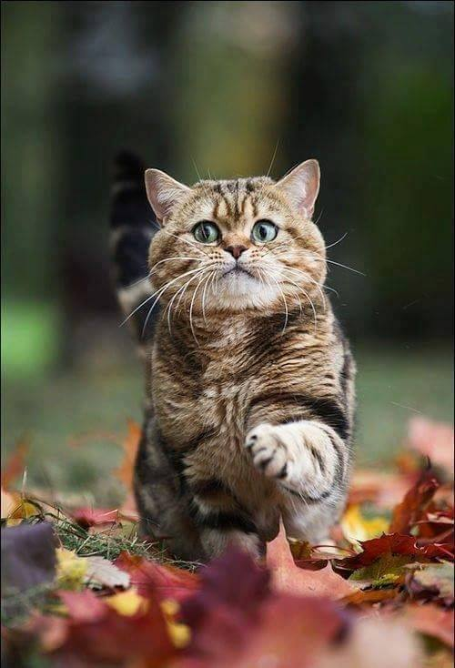 cat playing with leaves surprised