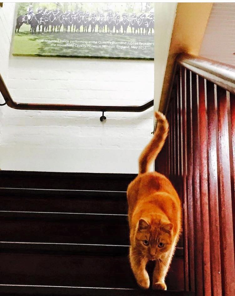 ed patrolling the office