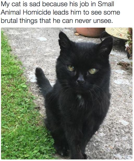 sad cat 1