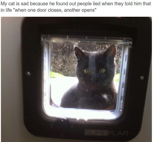 sad cat 14