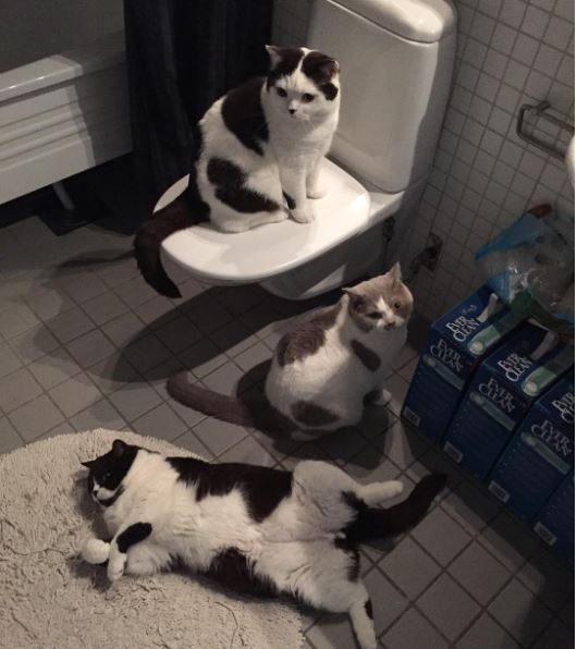 patty cake cats hanging out in the bathroom