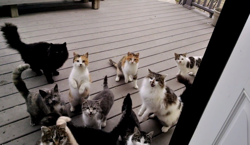 gang of cats on back porch