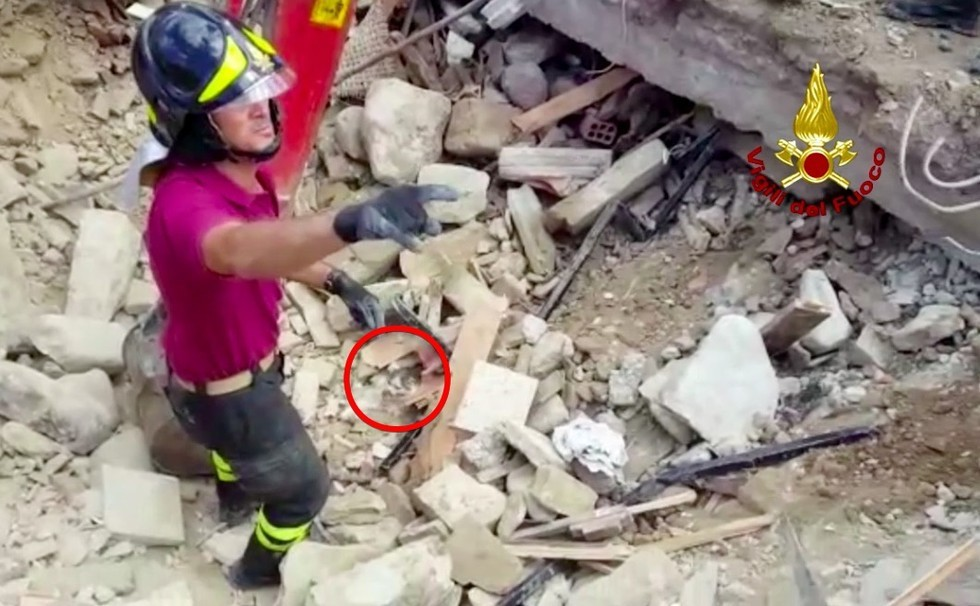 cat found in rubble in Italy