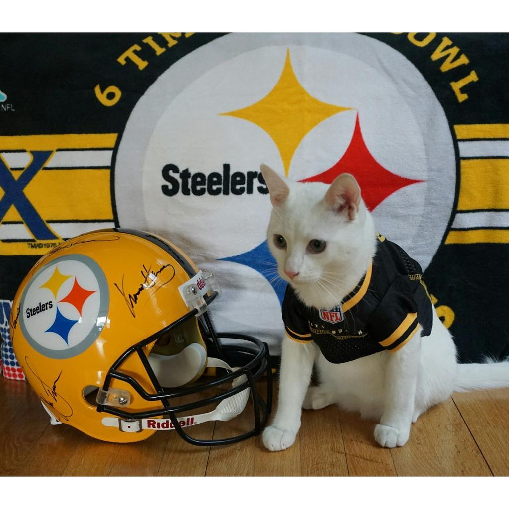 steelers cat