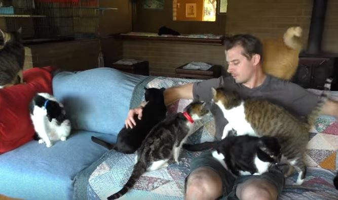 chris on the couch with cats