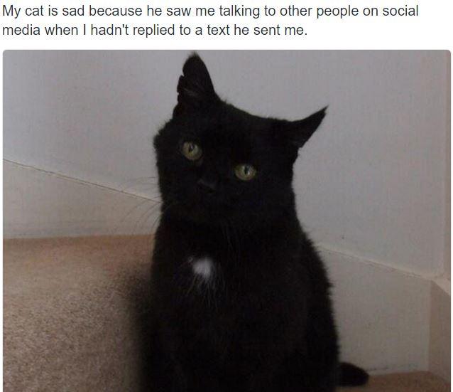 sad cat 15