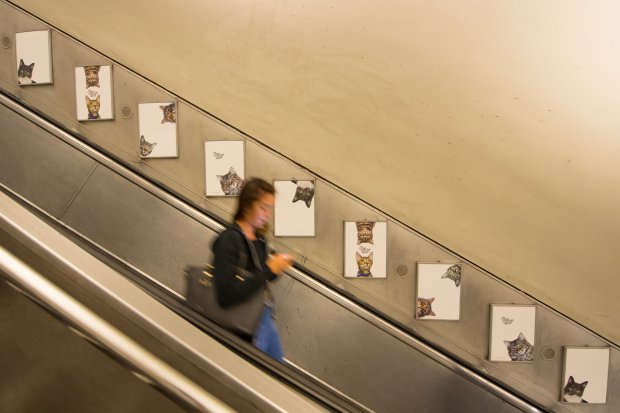 cat advertisements in london subway