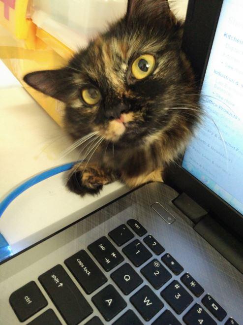 tortie cat behind computer