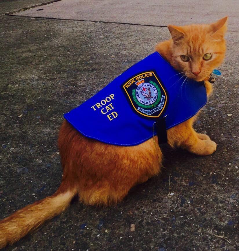 cat cop wearing his uniform
