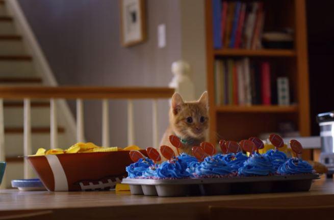 kitten waiting for snacks