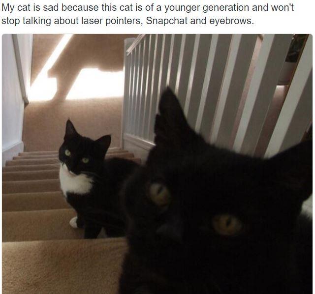 sad cat 12