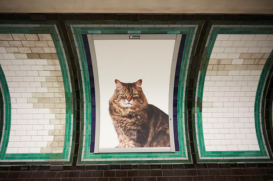 london cat ads