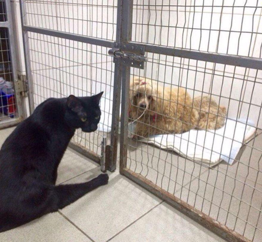 lyutsik meeting with dog