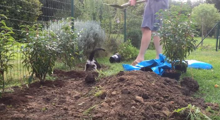 cat diving into hole