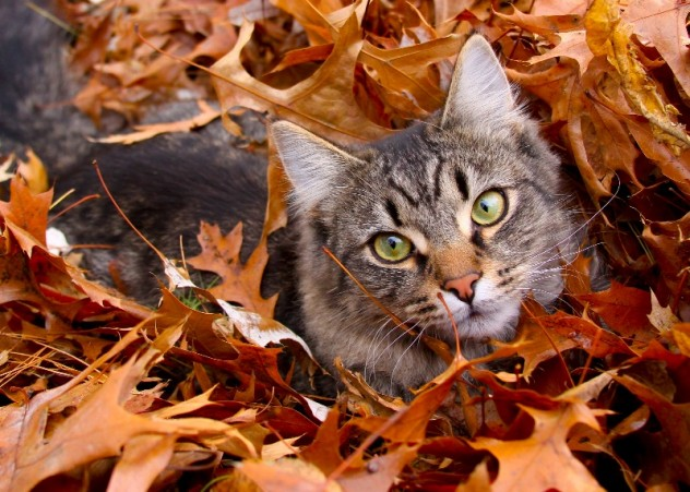 cat relaxing in leaves
