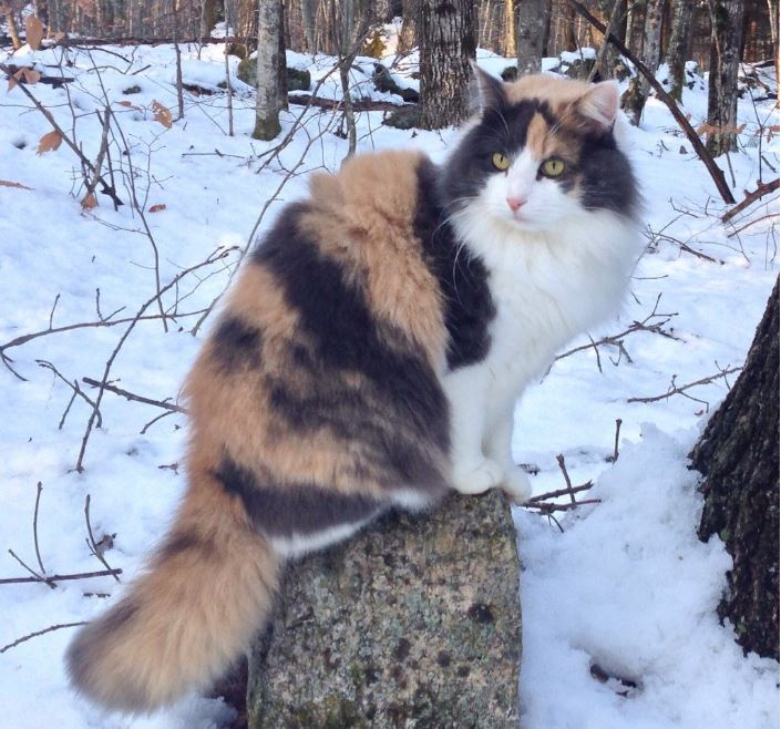 calico on a tree stump