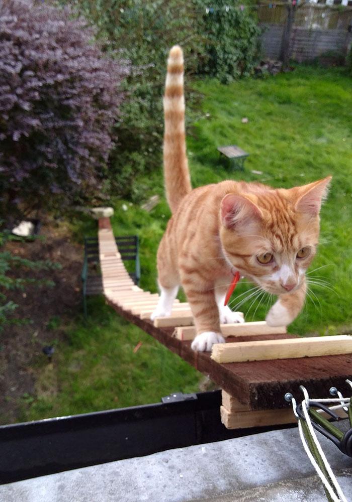 cat climbing ladder