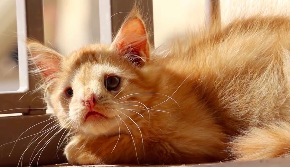 romeo the kitten