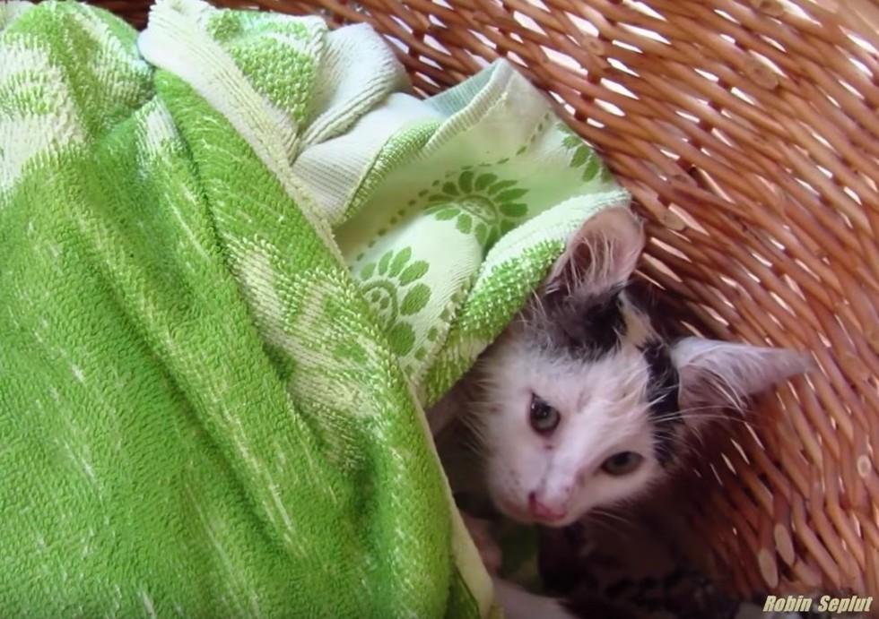 kitten after bath