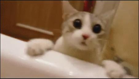 brave cat scared face