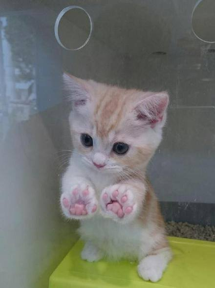 15 Adorable Pictures Of Kitty Toe Beans