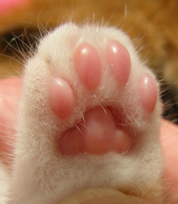 toe beans 3