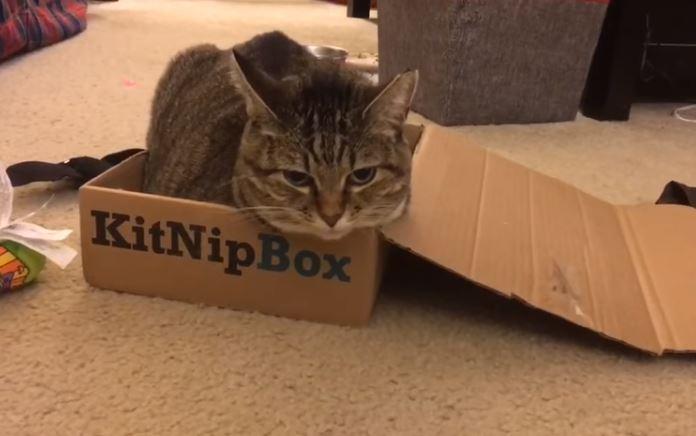 minnie sitting in the kitnipbox