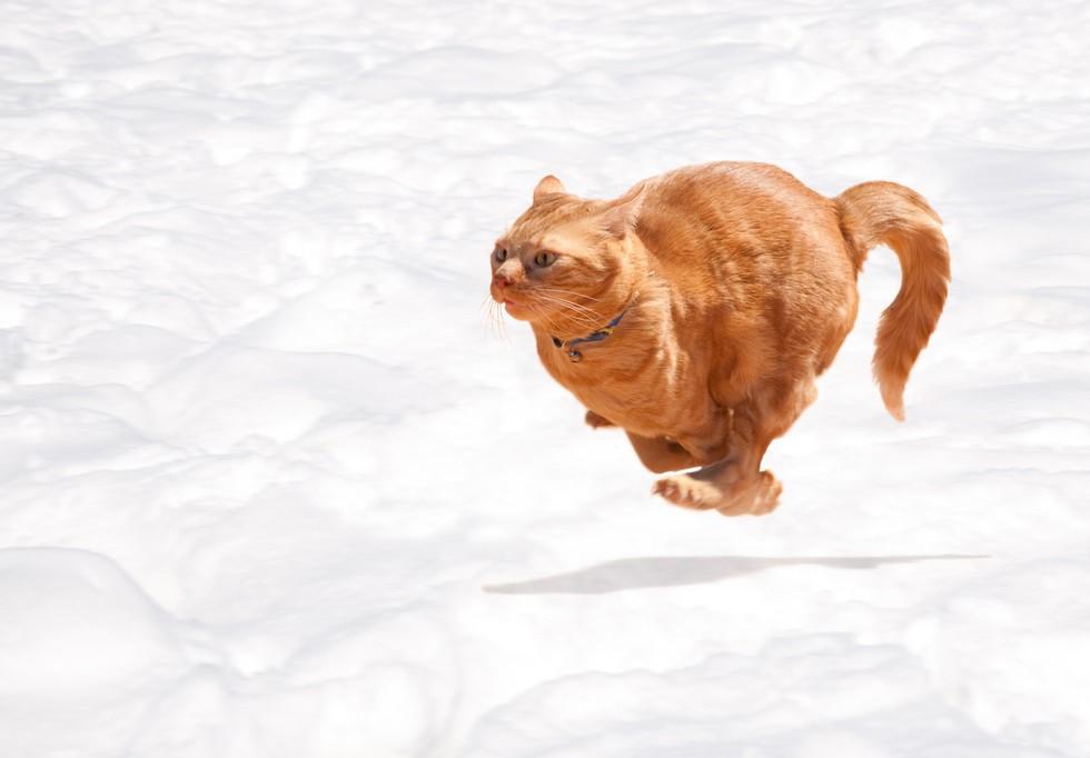 cat sprinting