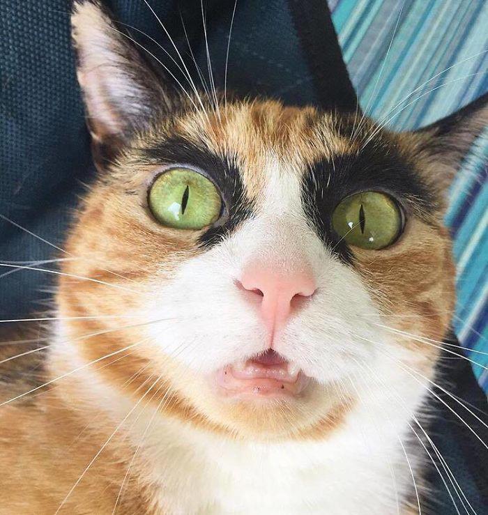 crazy eyebrow cat 1