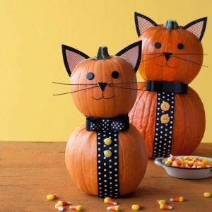 tuxedo cat pumpkins