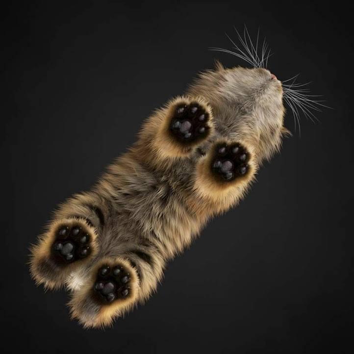 toe beans 8